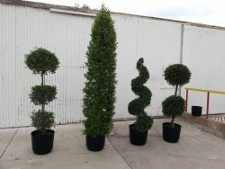 topiaries and cypress