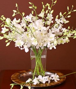 White Dendrobiums in Vase