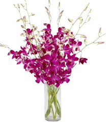 dendrobium purple orchid arrangement